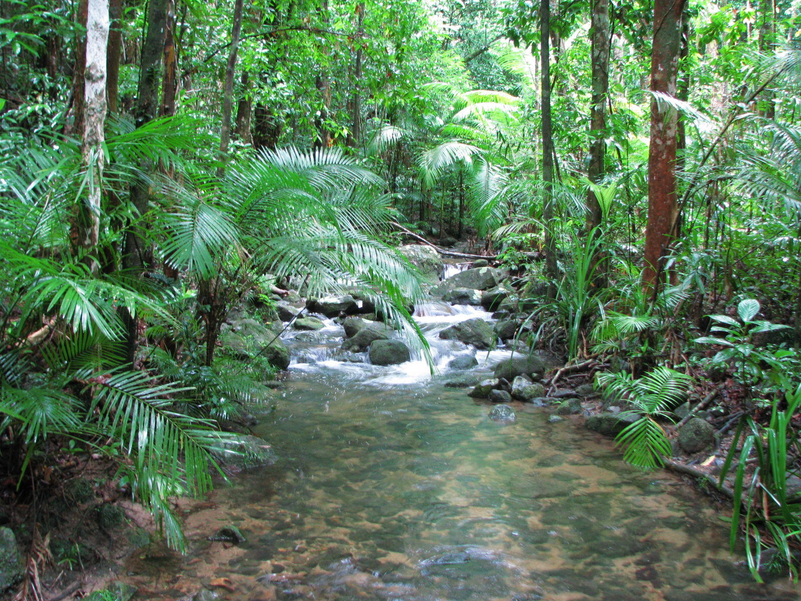 Tributary of Mossman River, in Mossman Gorge