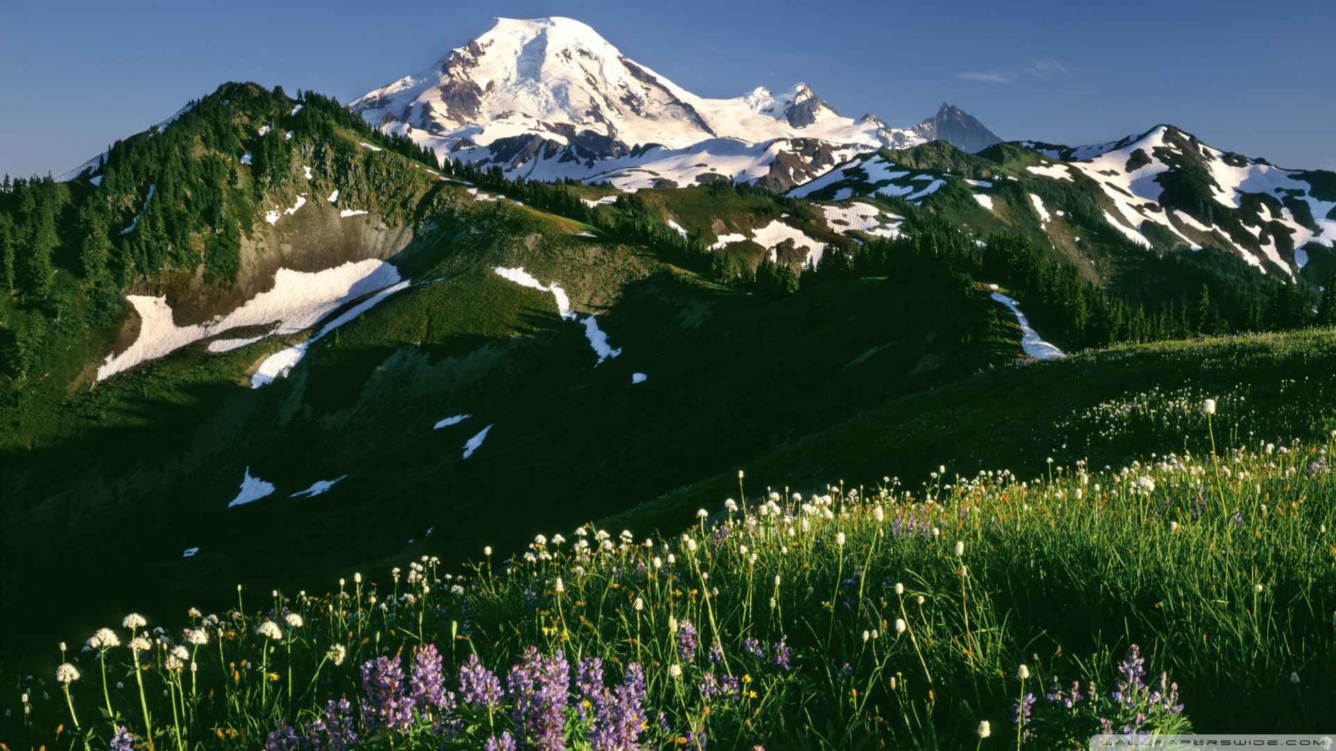 Mount Baker Mountain In Washington Thousand Wonders