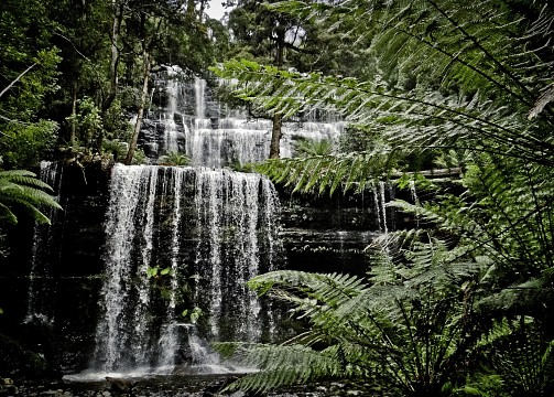 Russell	Falls - Mount Field