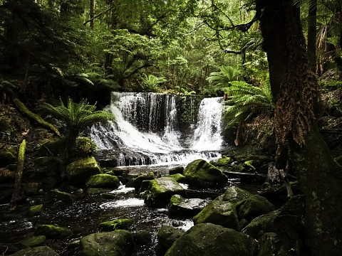 Horseshoe