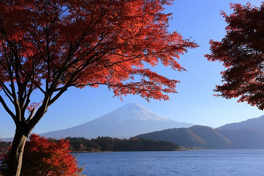 Momiji