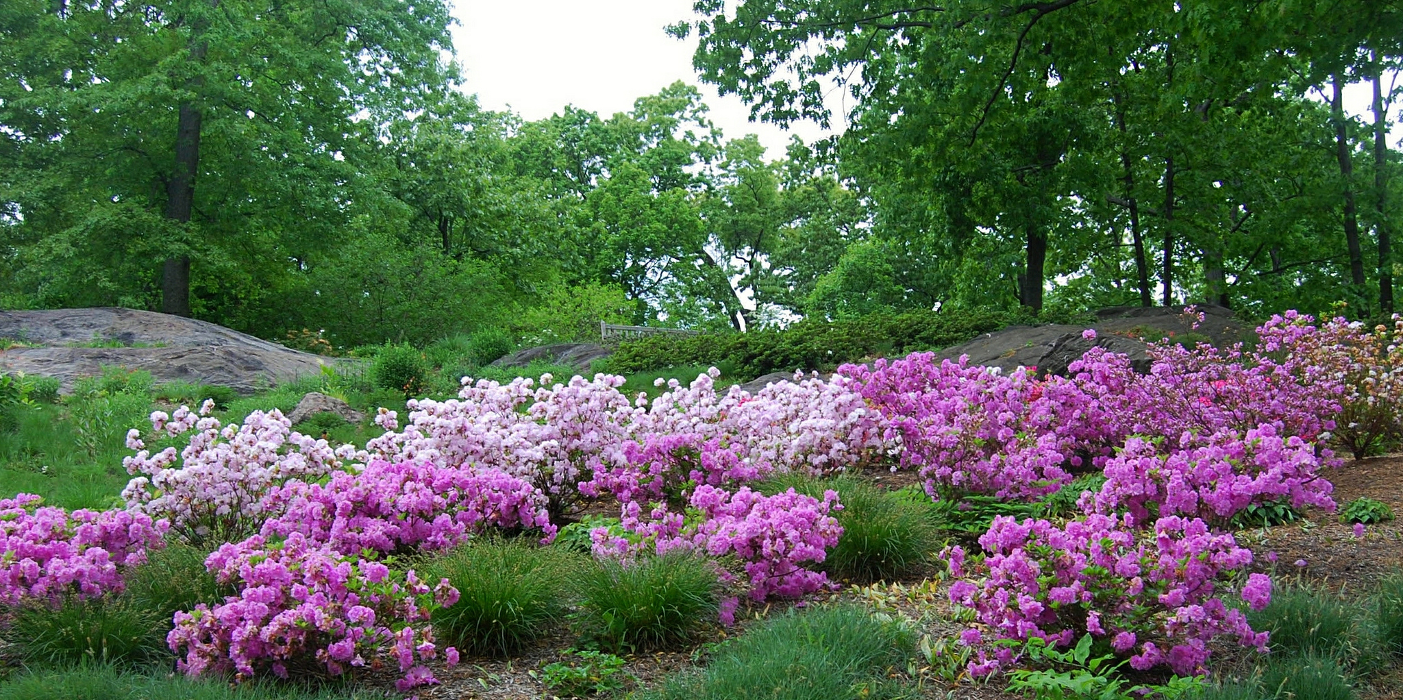 The New Azalea Garden At The New York Botanical Garden ...