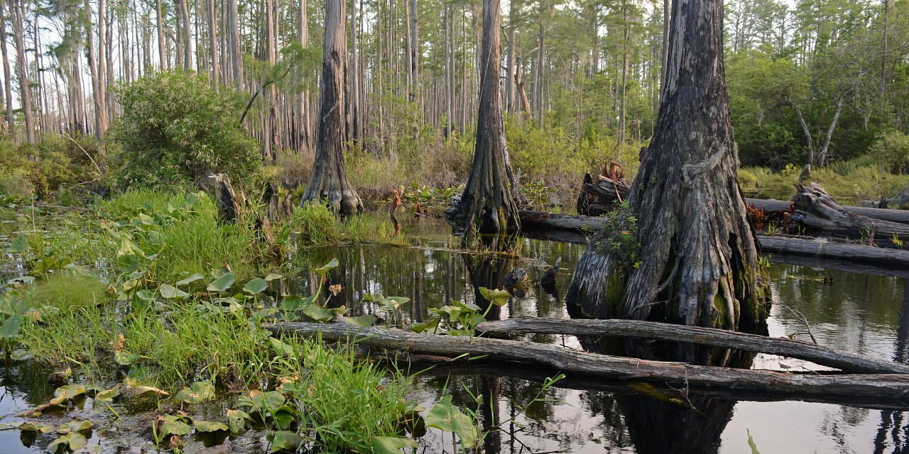 the distinction of styles in the two passages on floridas okefenokee swamp Encounter vivid natural and human history on two beautiful islands and the amazing okefenokee national wildlife refuge hike the interior maritime forest of amelia and cumberland islands with a naturalist, boat into the okefenokee swamp and end your week with an amelia river study cruise to view rare birds, dolphins and manatees.