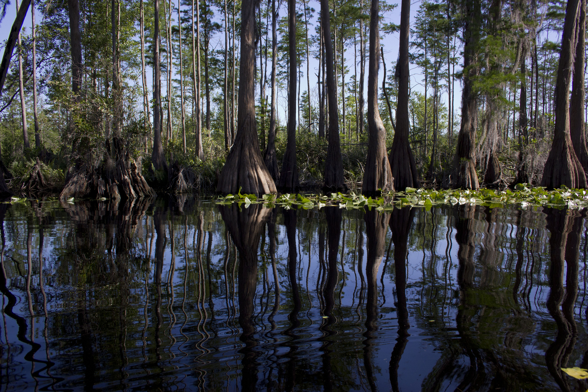 okefenokee swamp and