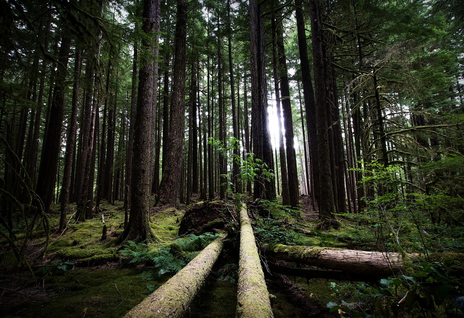 Olympic Forest - Olympic National Forest