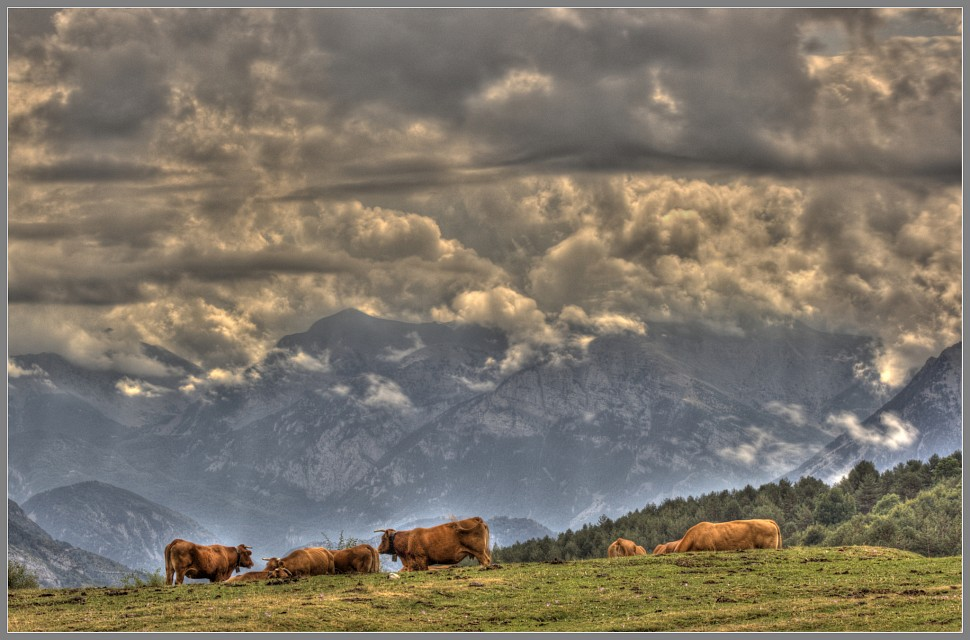 Clouds and cows - Ordesa y Monte Perdido National Park