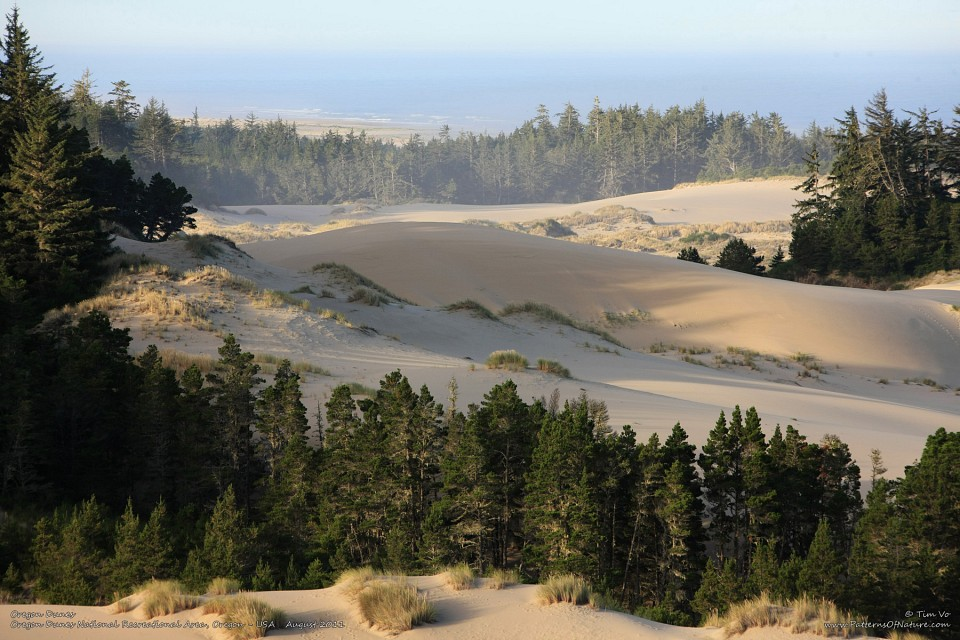 map of the state oregon with Oregon Dunes National Recreation Area on Great Oregon Hikes Silver Falls State Park as well Newport oregon also Oregon Dunes National Recreation Area additionally FigI also Oregon Rifles For Sale Custom Ar 15.