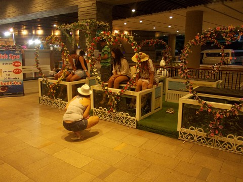 Fish massage -