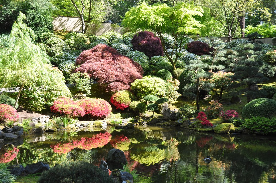 Upper pond - azalea hill in bloom -