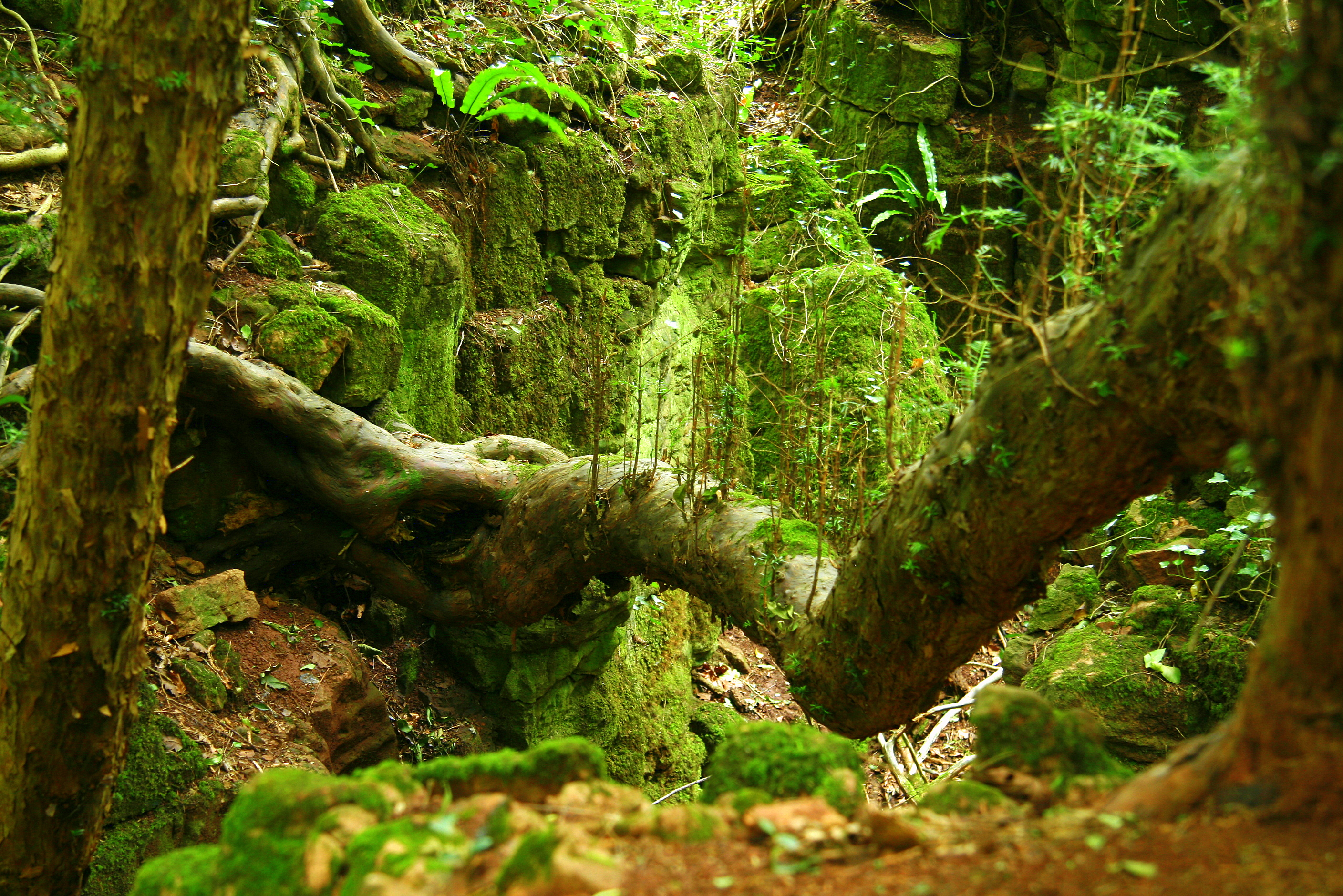 Puzzlewood Forest In England Thousand Wonders