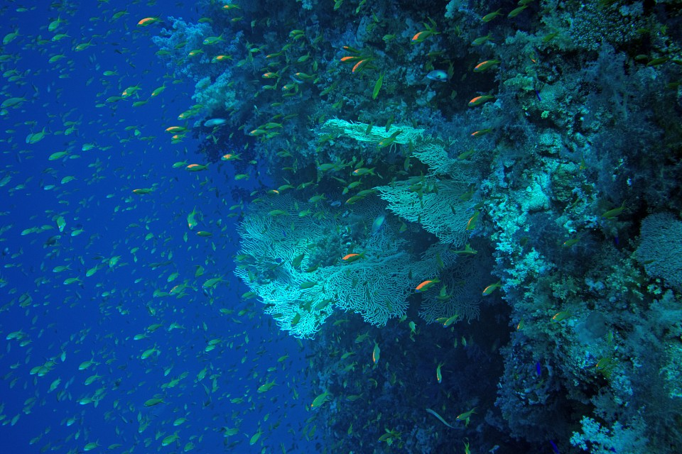 Coral Reef, Ras Muhammad National Park, Red Sea - Ras Muhammad National Park