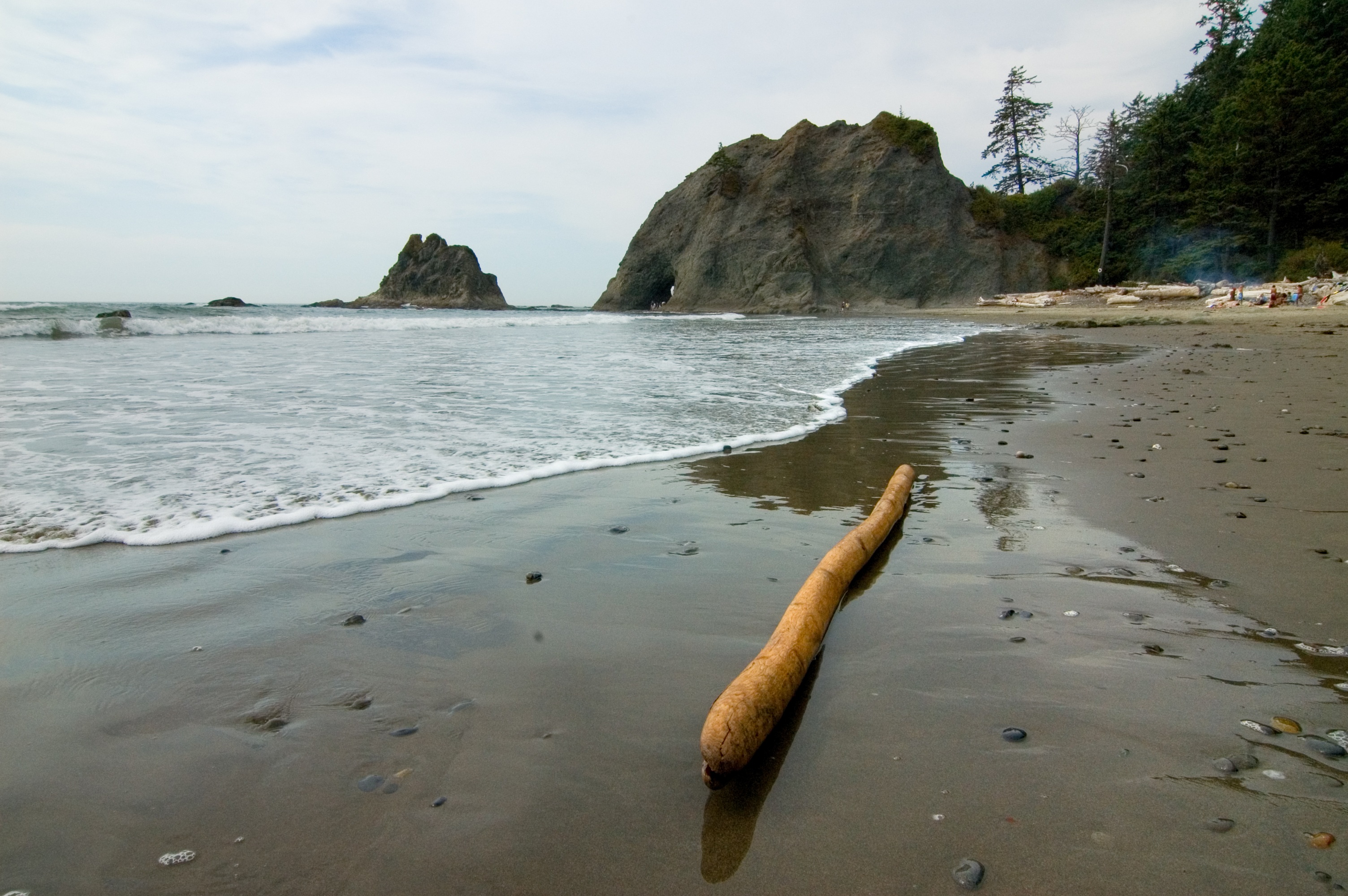 Beach In Olympic National Park