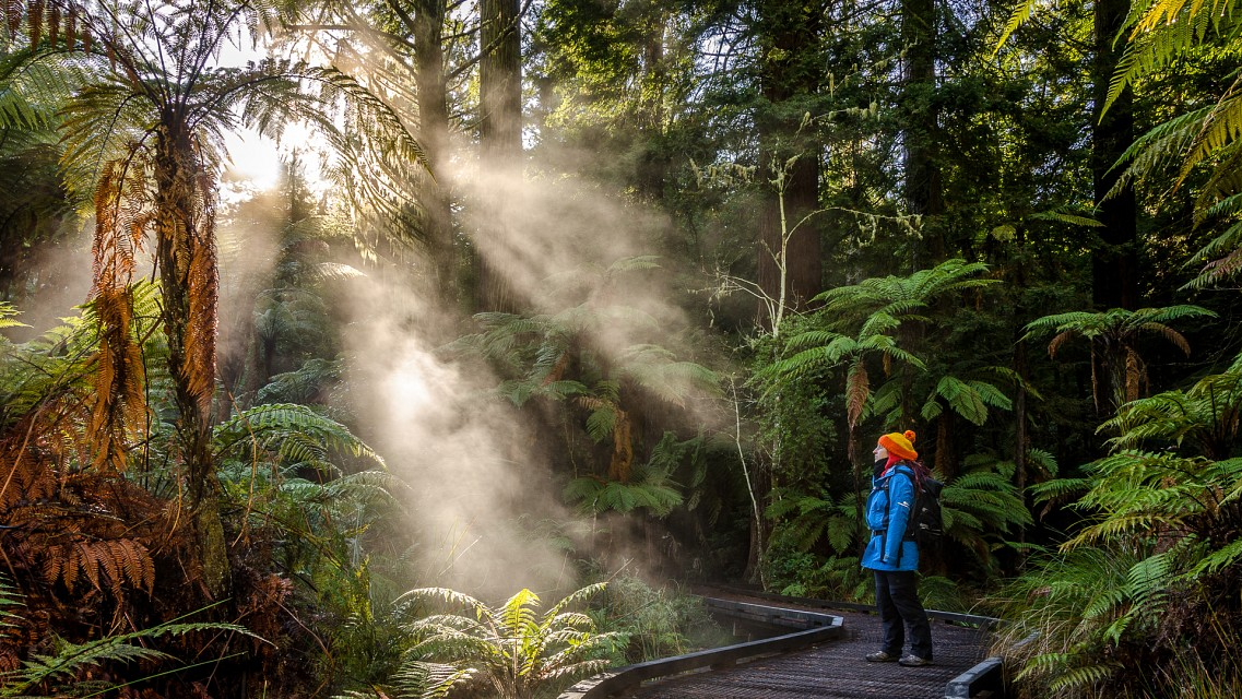 Redwood Forest Morning - Rotorua