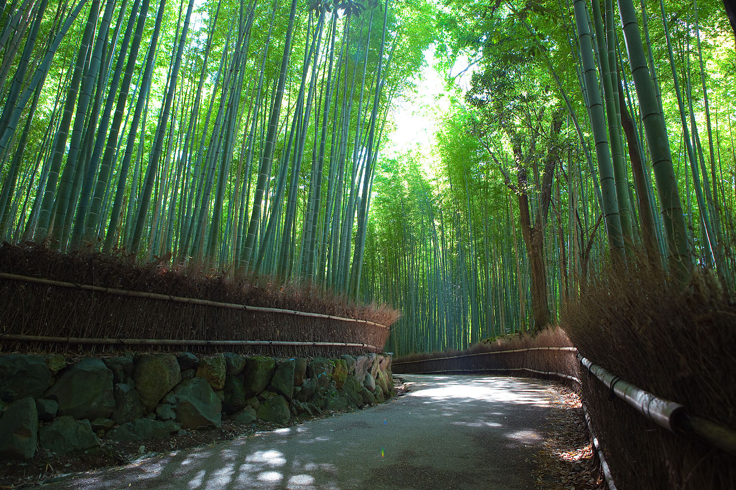 Sagano Bamboo Forest - Forest in Kyoto - Thousand Wonders