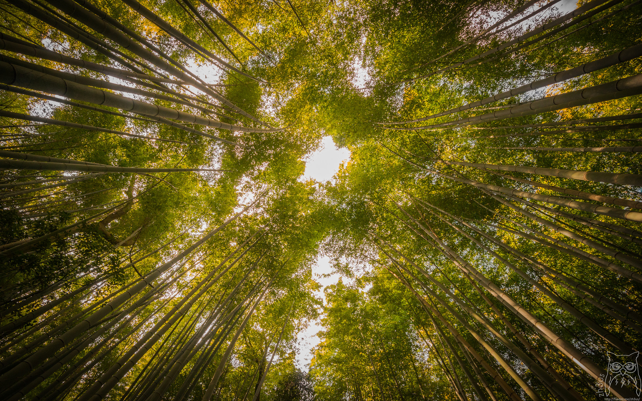 Sagano Bamboo Forest Forest In Kyoto Thousand Wonders