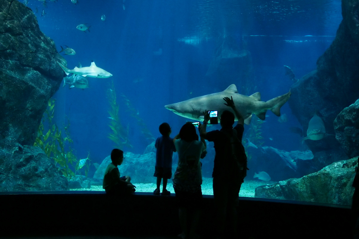 Siam Ocean World Aquarium In Bangkok Thousand Wonders Thailand Et Ticket Sea Life Only Adult Photo By