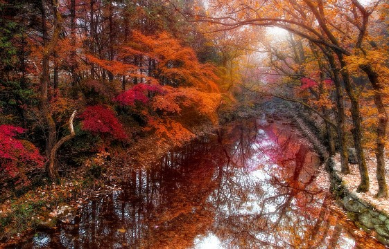 Lovely memories of the autumn - South