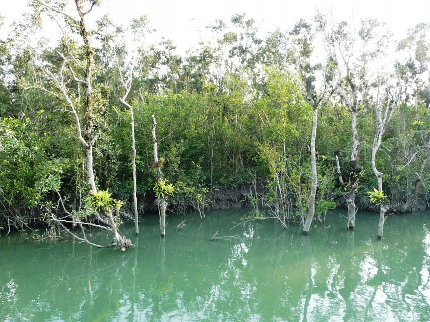Mangroves - Sundarbans National Park