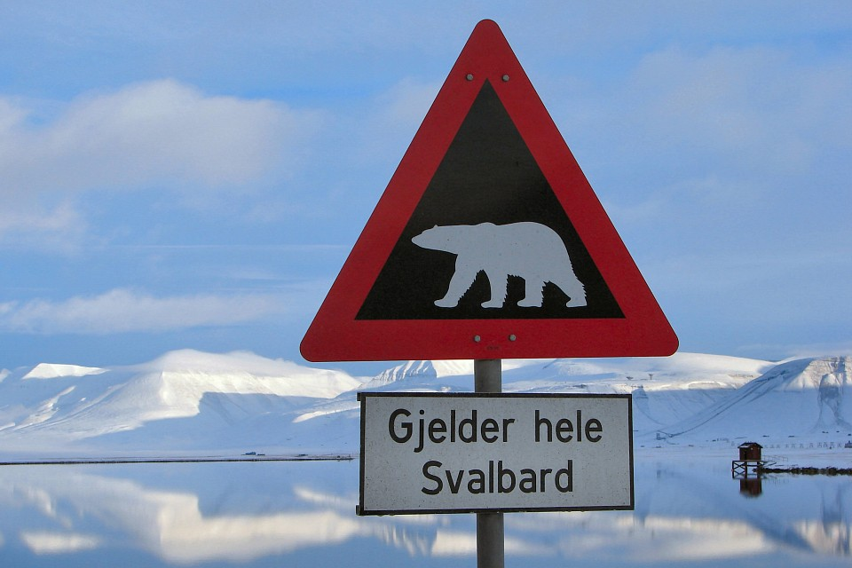 Warning: Polar Bears - Svalbard Islands