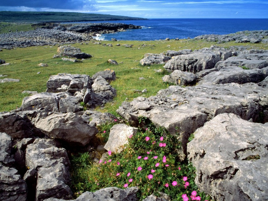 Wildflowers of the Burren, Ireland - The Burren