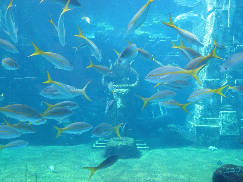 """Yellowtail with Bull Idol """"Ruins"""" - The Dig"""