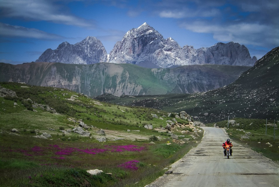 High mountain road, Tibetan flowers - Tibet