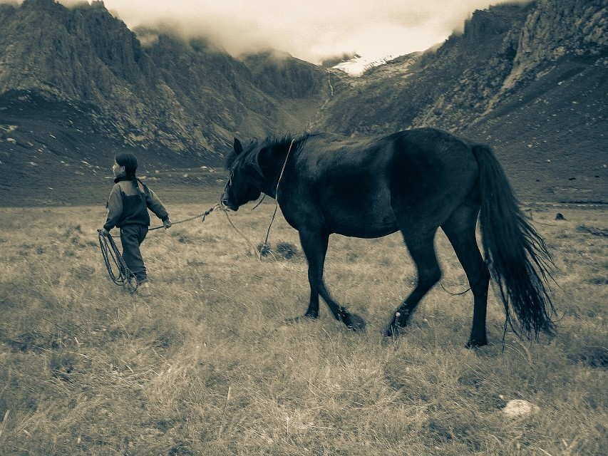 Tibetan Girl leading Horse away - Tibet