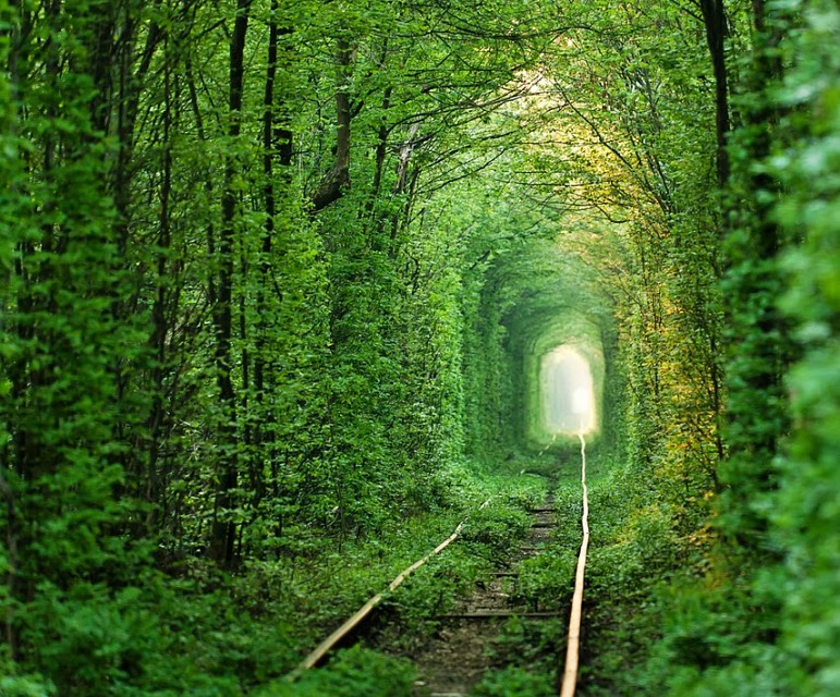 Tunnel of Love. Road in Ukraine, Europe