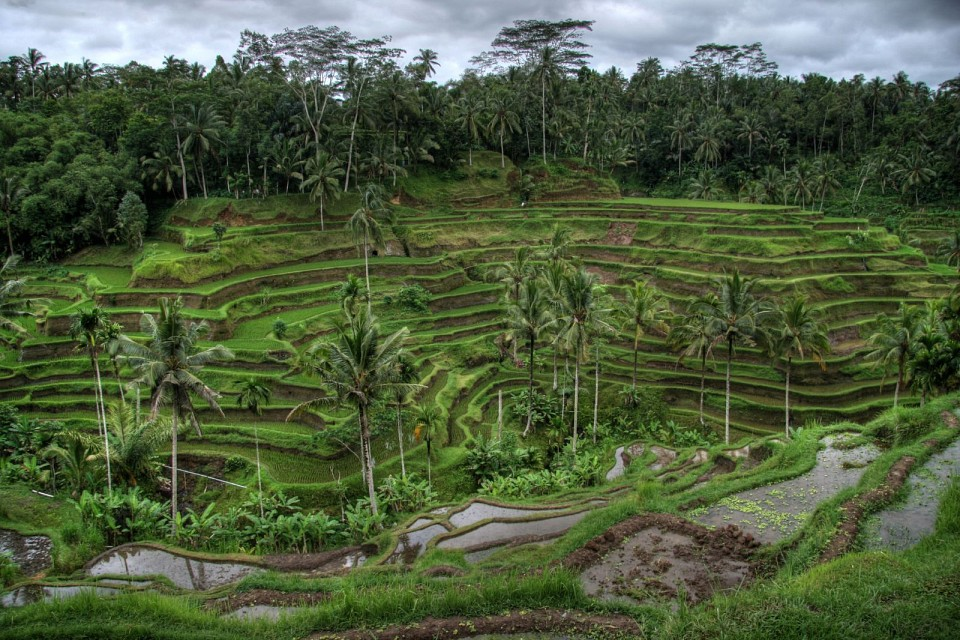 Rice Valley, Near Ubud, Bali - Ubud