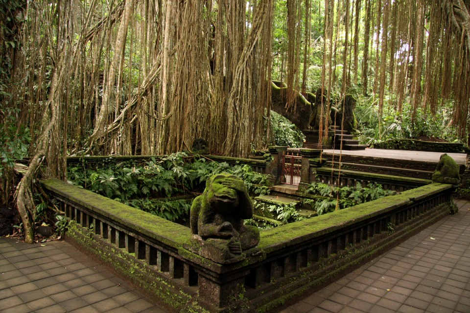 Forest bath in Monkey Forest Ubud - Ubud