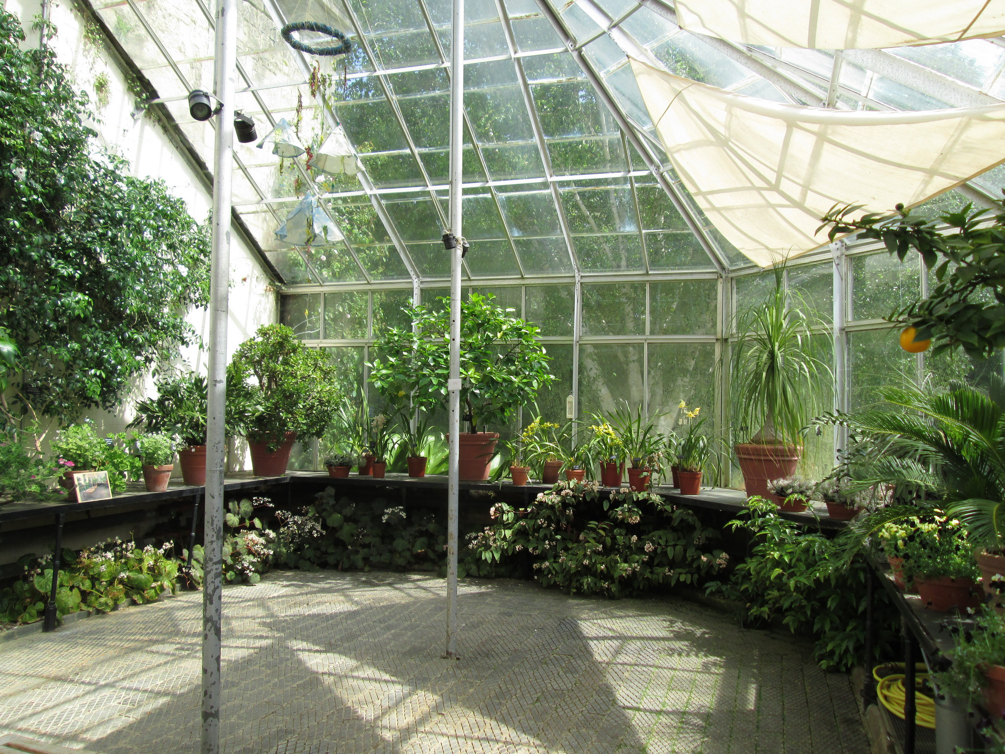 University of Oxford Botanic Garden - Botanic Garden in ...