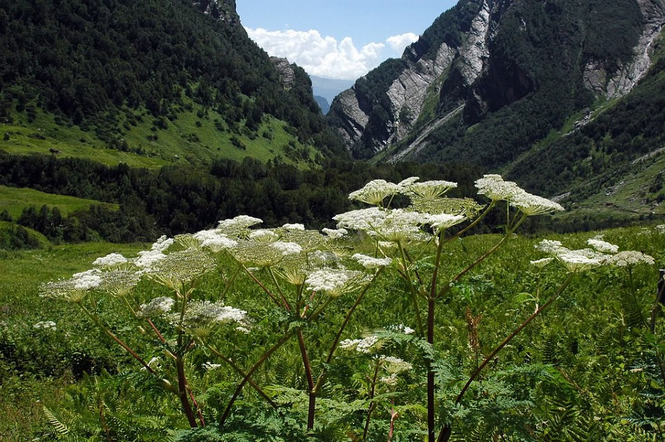 - Valley of Flowers National Park