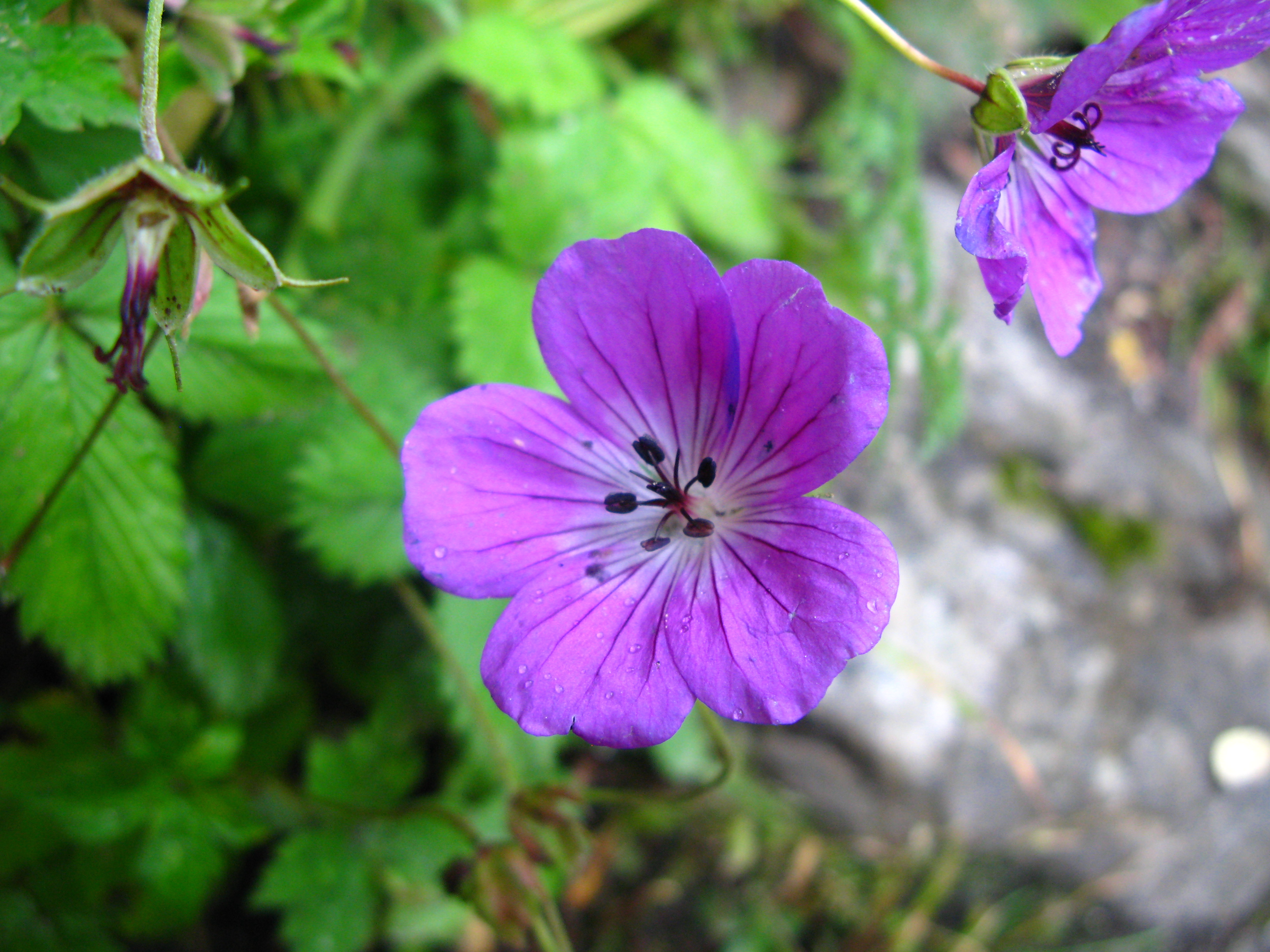 Valley of flowers national park national park in uttarakhand valley of flowers national park izmirmasajfo