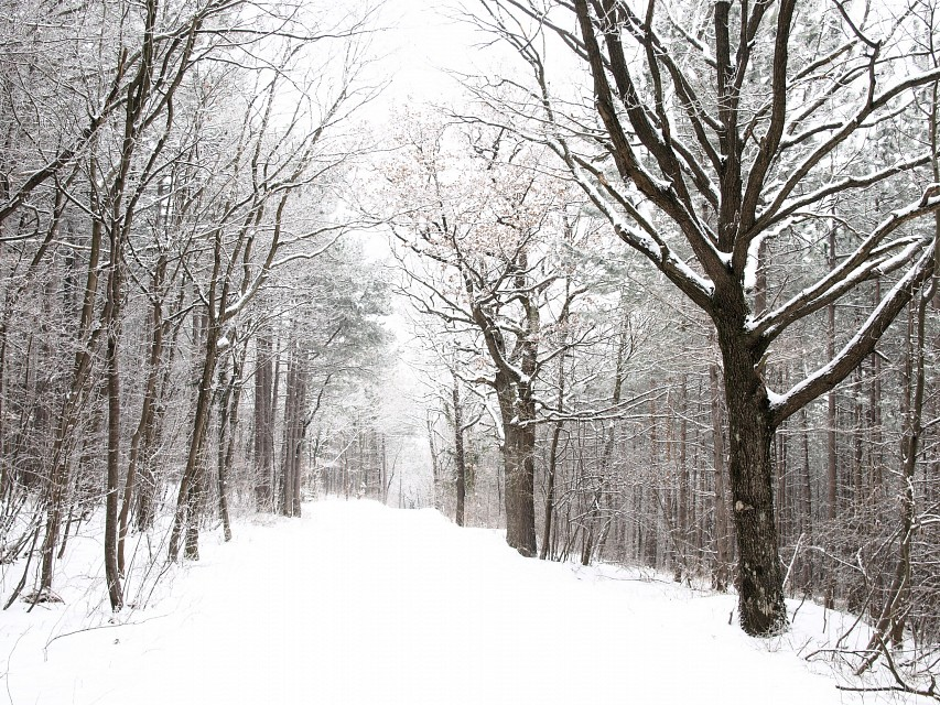Into the snowy forest - Vienna Woods