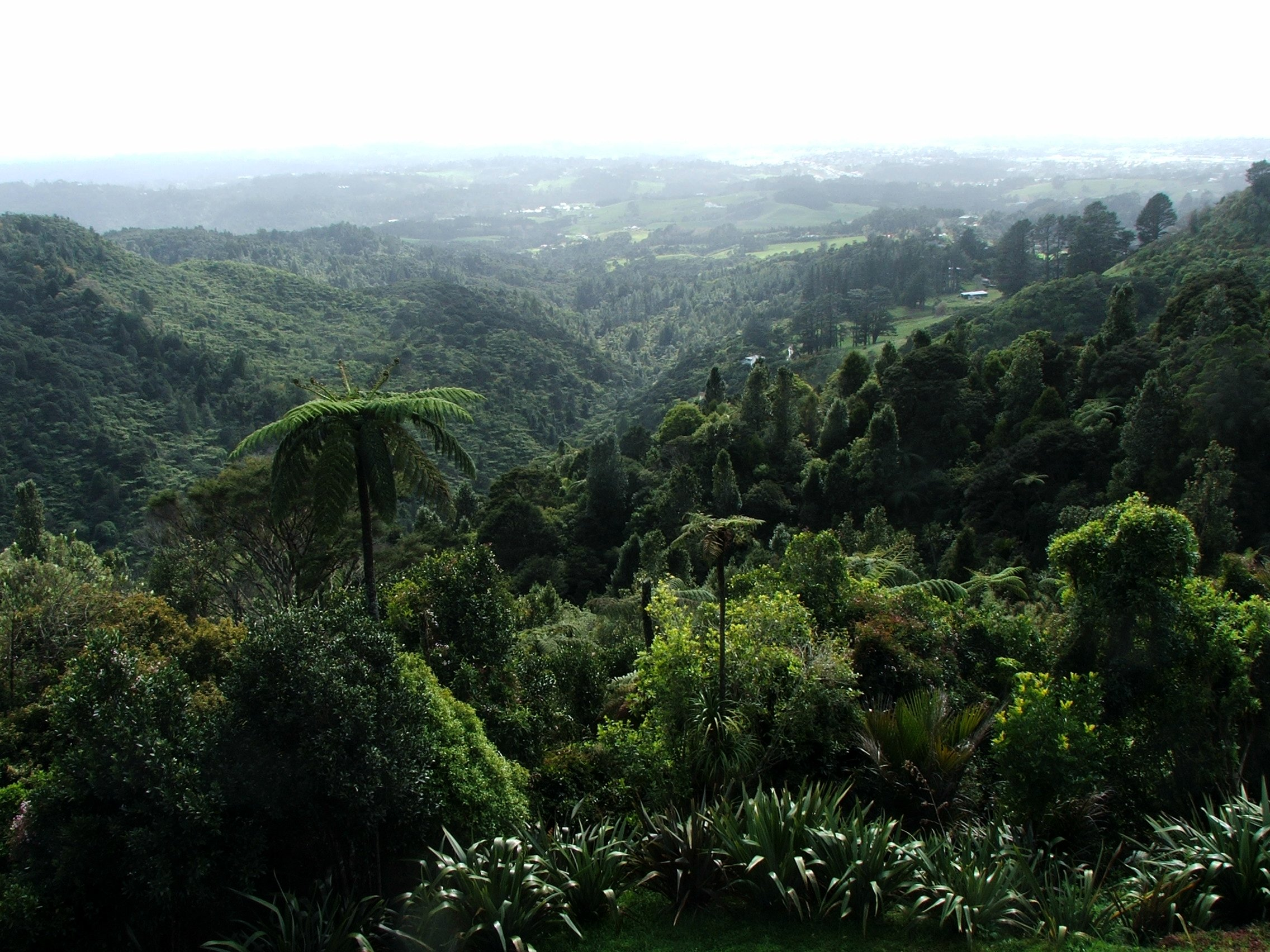 Waitakere Ranges - Forest In New Zealand