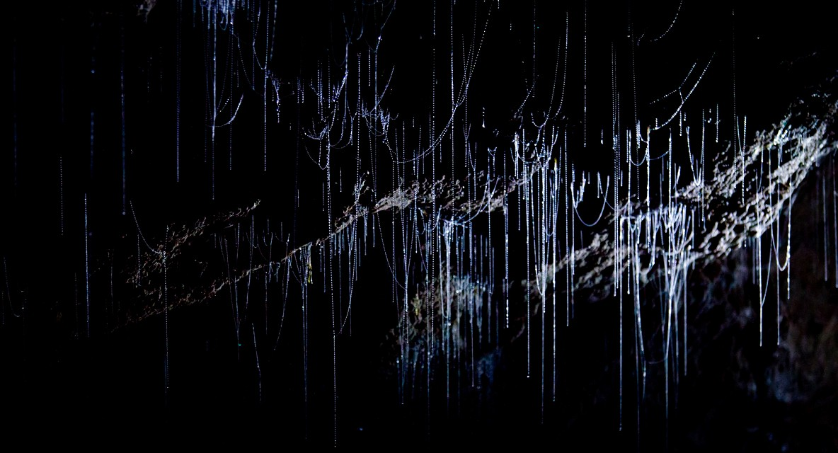 More Ruakuri Glow Worm Threads - Waitomo Caves