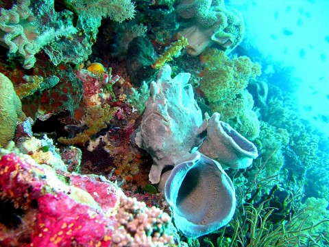 - Wakatobi National Park