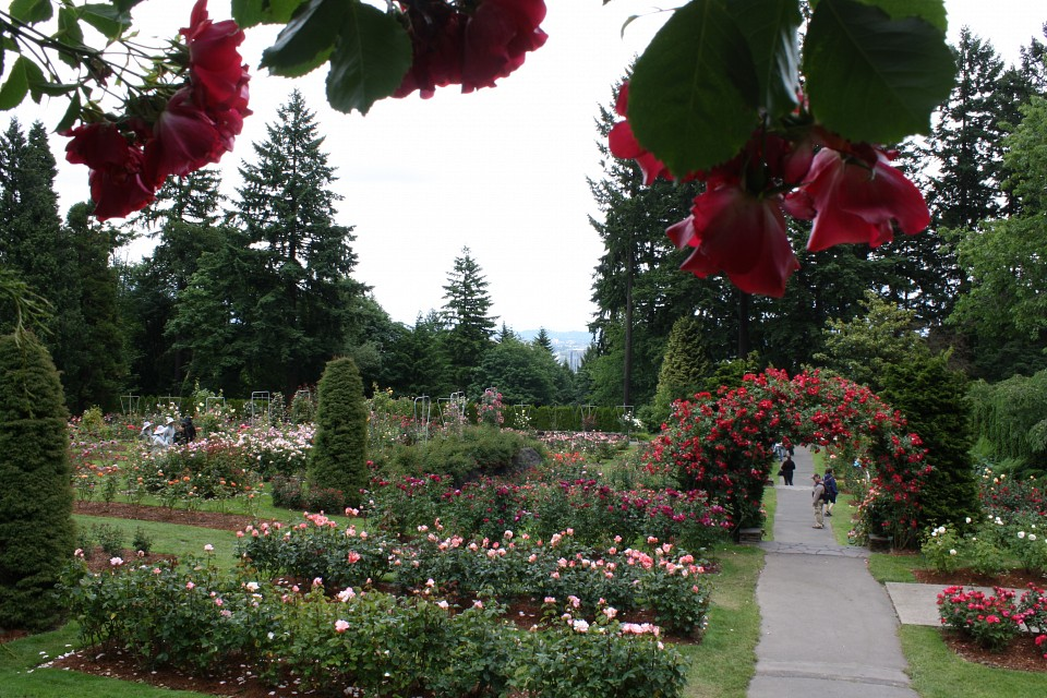 International Rose Test Garden - Washington Park Portland