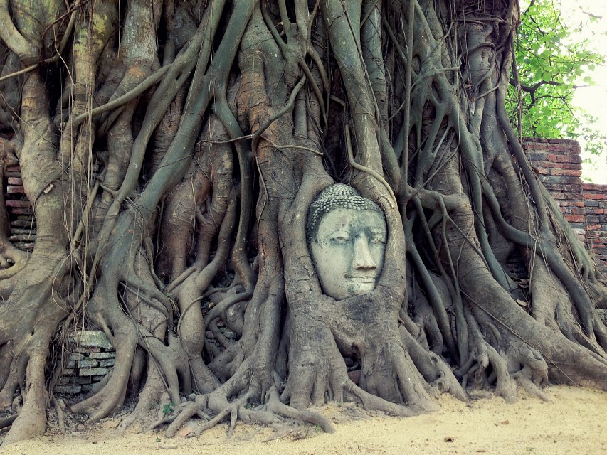 Head in the trees - Wat Mahathat Ayutthaya