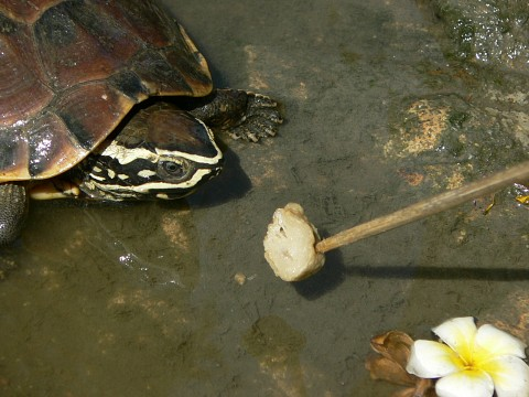Feeding