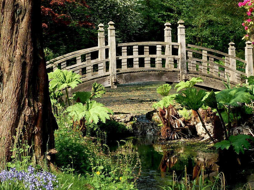 Japanese Bridge - Winterbourne Botanic Garden