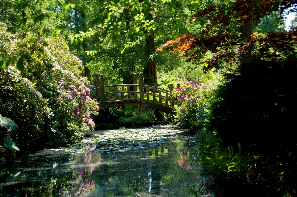 Bridge - Winterbourne Botanic Garden