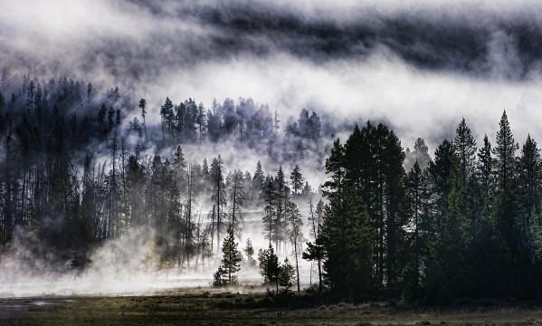 The Forest on the Mega Volcano -