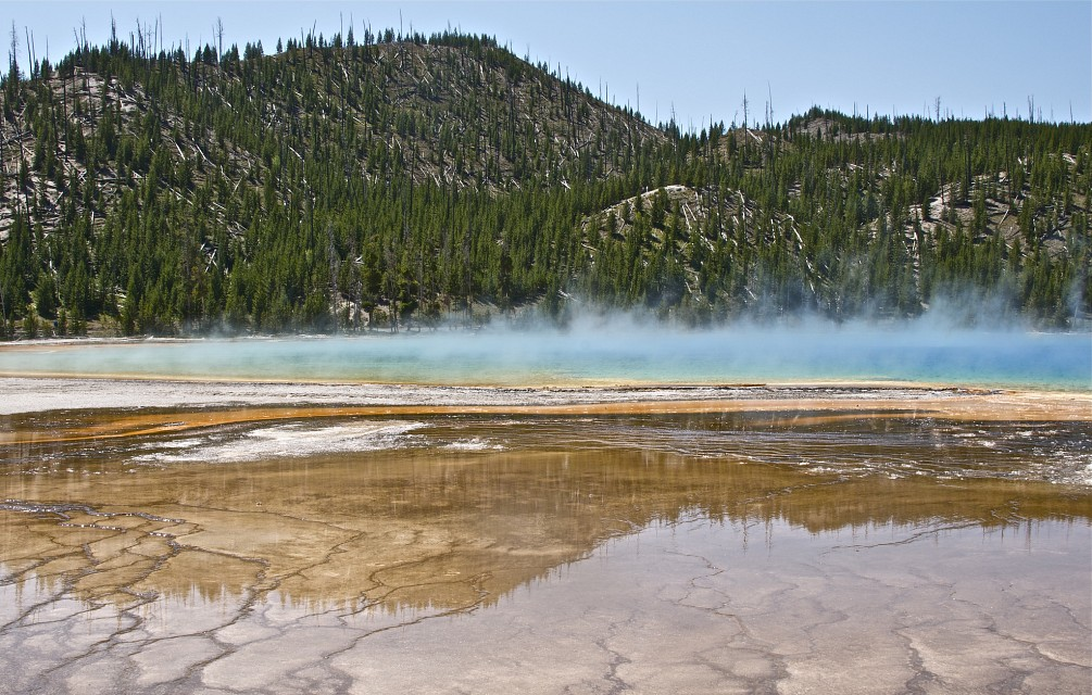 One of the many
