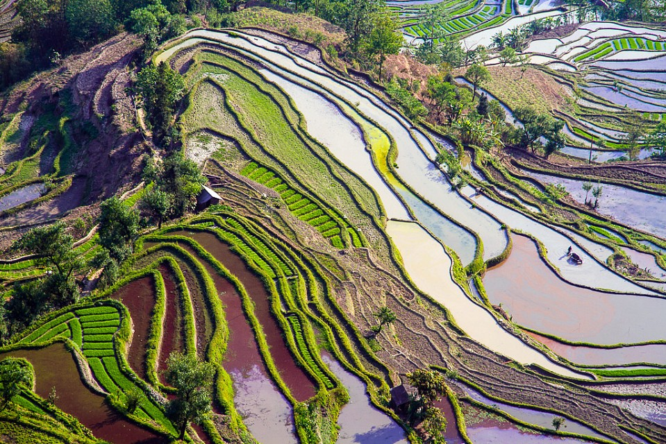 Rice Terraces - Yuanyang County